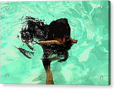 Rottweiler Dog Swimming Acrylic Print by Sally Weigand