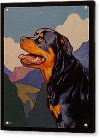 Rottweiler In Rottweil Acrylic Print
