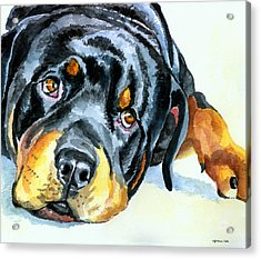 Rottweiler Acrylic Print by Lyn Cook