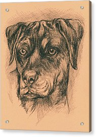 Rottweiler Mix In Charcoal Acrylic Print