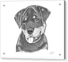 Rottweiler Puppy- Chloe Acrylic Print by Patricia Hiltz