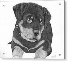 Rottweiler Puppy Acrylic Print by Patricia Hiltz