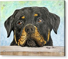 Rottweiler's Sweet Face 2 Acrylic Print by Megan Cohen