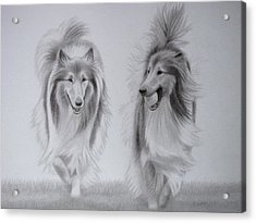 Rough Collie Sisters Acrylic Print by Karen Wood