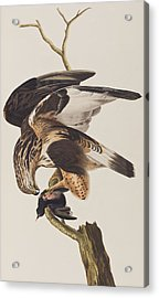 Rough Legged Falcon Acrylic Print by John James Audubon