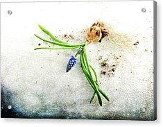 Rough Start Acrylic Print by Randi Grace Nilsberg