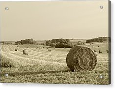 Acrylic Print featuring the photograph Round Bales by John Hix