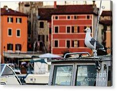 Rovinj Harbor Seagull - Rovinj, Istria, Croatia Acrylic Print