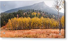 Row Of Aspens In The Fall River Valley - Fall Foliage In Estes Park Colorado Acrylic Print