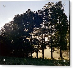 Acrylic Print featuring the photograph Row Of Trees by Josean Rivera