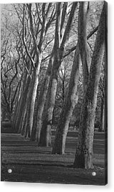 Row Trees Acrylic Print