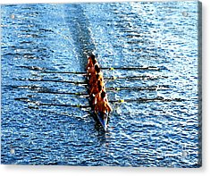 Rowing In Acrylic Print by David Lee Thompson