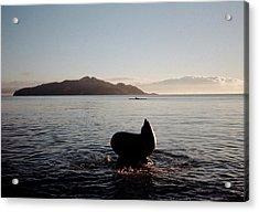 Rowing Off Sausalito, Ca Acrylic Print