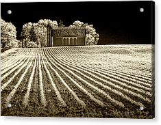Rows In A Farm Field With Barn And Silo In Infrared Sepia Tone Acrylic Print by Randall Nyhof