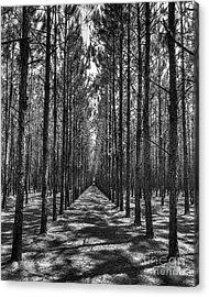 Rows Of Pines Vertical Acrylic Print