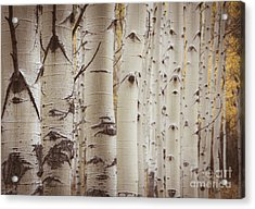 Acrylic Print featuring the photograph Rows by The Forests Edge Photography - Diane Sandoval