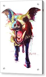 Roxie The Wild Boar Acrylic Print by Amy Eichler