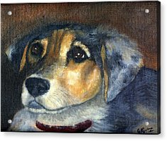 Acrylic Print featuring the painting Roxie by Gail Kirtz