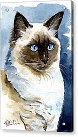 Roxy - Ragdoll Cat Portrait Acrylic Print