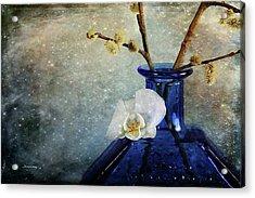 Royal Blue Acrylic Print by Randi Grace Nilsberg