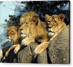 Royal Family Acrylic Print