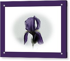 Royal Iris Acrylic Print by Marsha Heiken