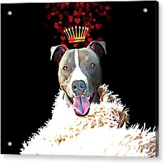 Royal Love Pup, Pit Bull Terrier, Crown Of Hearts Acrylic Print