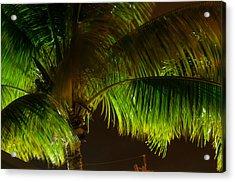 Royal Palm Night Out Acrylic Print