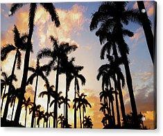 Royal Palm Way Acrylic Print by Josy Cue