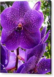 Royal Purple Orchids Acrylic Print