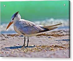 Royal Stance Acrylic Print by Delores Knowles