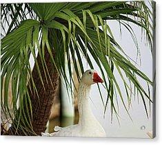Royale Goose Acrylic Print by Francesco Roncone