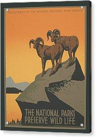Rreserve Wildlife Acrylic Print by Unknown