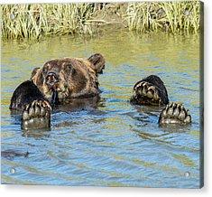 Rub A Dub Dub A Bear In His Tub Acrylic Print