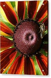 Rubeckia And Bee Acrylic Print by Margaret G Calenda