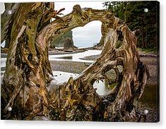 Ruby Beach Driftwood 2007 Acrylic Print