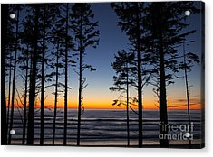 Ruby Beach Trees #4 Acrylic Print
