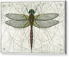 Ruby Meadowhawk Dragonfly Acrylic Print by Charles Harden
