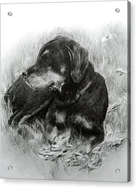 Acrylic Print featuring the drawing Ruby by Meagan  Visser