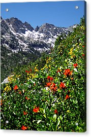 Ruby Mountain Wildflowers - Vertical Acrylic Print