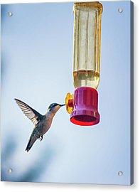 Ruby-throated Hummingbird 4 Acrylic Print