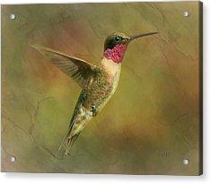 Ruby Throated Hummingbird Inflight Acrylic Print by Sandi OReilly