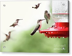 Acrylic Print featuring the photograph Ruby-throated Hummingbirds by Stephanie Frey