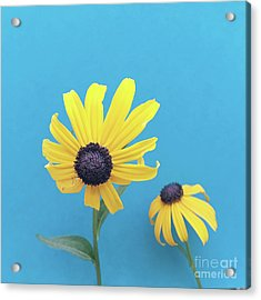 Acrylic Print featuring the photograph Rudbeckia 2 by Cindy Garber Iverson