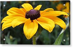 Rudbeckia Bloom Up Close Acrylic Print by Bruce Bley