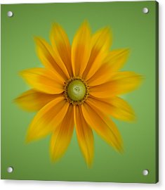 Acrylic Print featuring the photograph Rudbeckia Blossom Irish Eyes - Square by Patti Deters