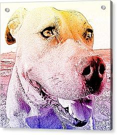 Rudy Acrylic Print