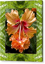 Acrylic Print featuring the photograph Ruffled Beauty by Bell And Todd