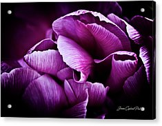 Ruffled Edge Tulips Acrylic Print by Joann Copeland-Paul