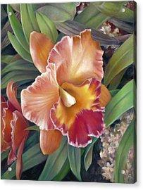 Ruffled Peach Cattleya Orchid Acrylic Print
